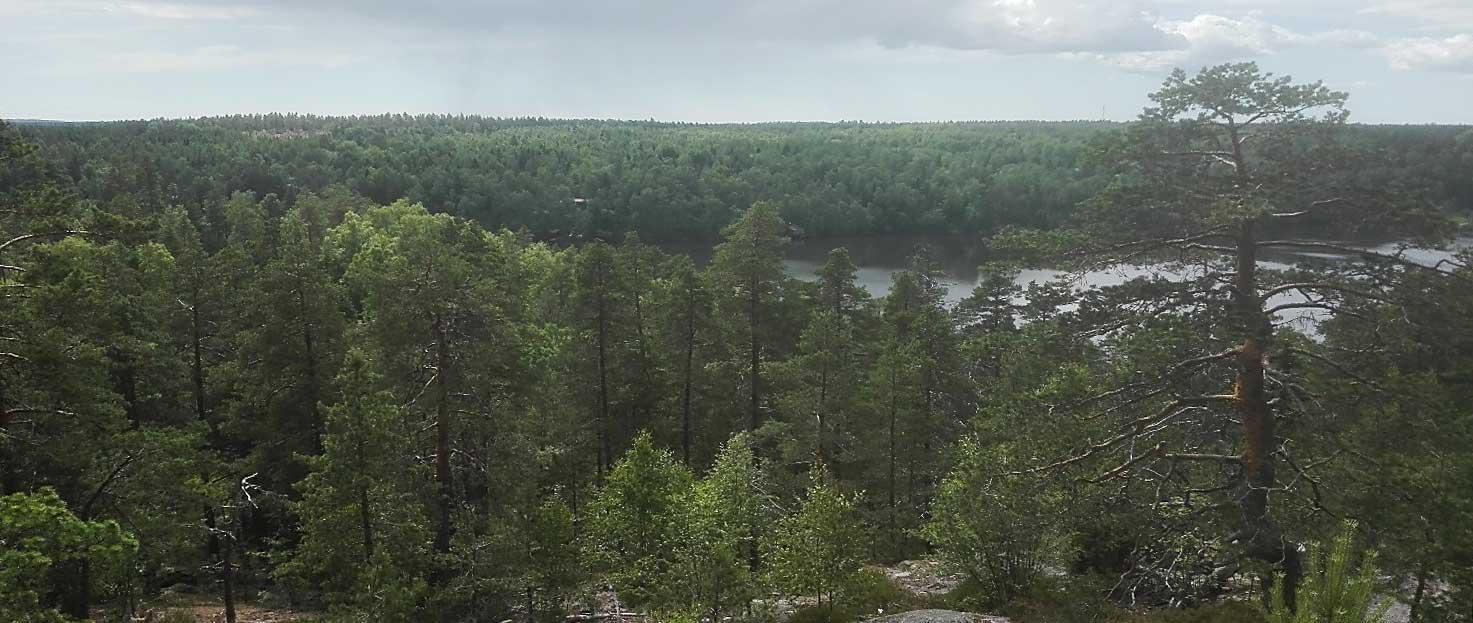 Metsään Uppoutuminen - Juha Koskinen